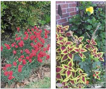 Creek County Master Gardener: Perennials vs Annuals - Sapulpa Times