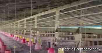 """""""Estamos desconsolados"""": empleado de granja violentamente saqueada en Puerto Tejada, Cauca - Noticias Caracol"""