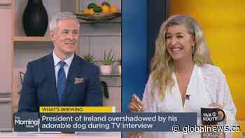 What's Brewing: The President of Ireland gets overshadowed by his adorable dog during a live TV interview