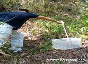 Voluntário resgata cobras em Monte Alegre do Sul - acidadeon.com