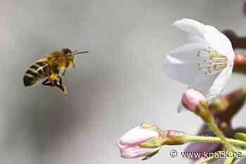 Europees Gerechtshof handhaaft verbod op bijenvergif