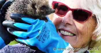 Meet the volunteers healing and caring for the region's poorly hedgehogs