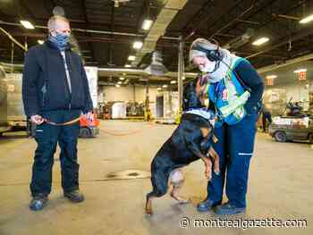 Essential delivery workers' biggest fan might be a Mirabel Rottweiler - Montreal Gazette