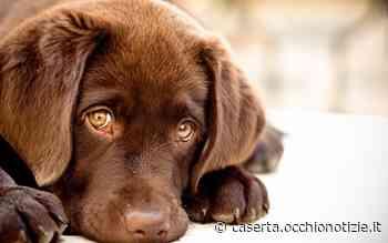 Allarme furti nel Casertano: rubati anche cani di razza - L'Occhio di Caserta