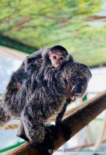Whipsnade Zoo welcomes baby animals this spring