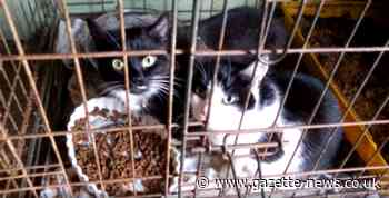 RSPCA show cramped and dirty conditions faced by caged cats