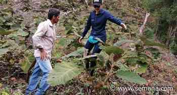 Familias de Aguachica conservarán 100 hectáreas de la serranía del Perijá - Semana