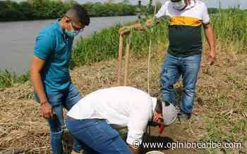 En El Banco siembran 400 árboles del proyecto 'Construyendo Ciudad Verde' - Opinion Caribe