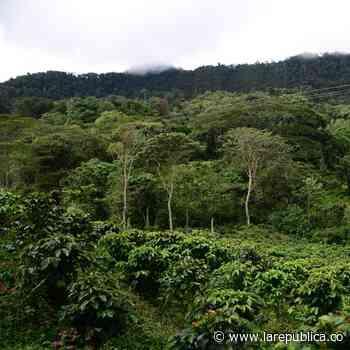 El sembratón del Banco Agrario superará meta de 110.978 árboles nativos plantados - La República