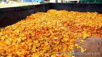 Scorze di agrumi, non buttatele - San Marino Rtv