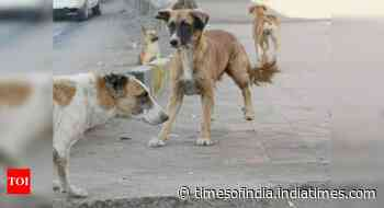 Odisha: Move to feed stray animals during lockdown - Times of India