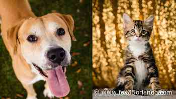 Orange County shelter seeks adopters for nearly 300 animals - FOX 35 Orlando