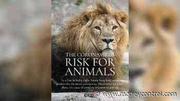 COVID-19   What we know about coronavirus infection risk for animals - Moneycontrol.com