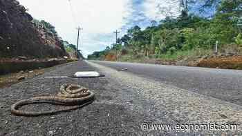 Roadkill provide a novel way to sample an area's animals - The Economist