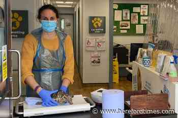Why 30 tortoises turned up at Herefordshire vets - Hereford Times