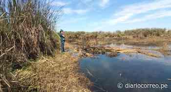 Agricultores invaden laguna de Pucchum en Camaná - Diario Correo