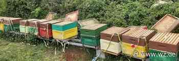 Verwüstung an 40 Bienenvölkern in Willich - Westdeutsche Zeitung