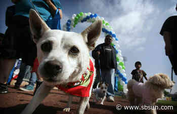 Virtual Walk for the Animals will benefit Humane Society of San Bernardino Valley - San Bernardino County Sun