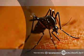 36 casos de dengue foram confirmados em Lucas do Rio Verde desde o início do ano - CenárioMT