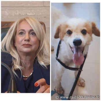 Ottimi numeri per il canile di via Po a Cagliari: in un anno e mezzo adottati 180 cani - Casteddu Online