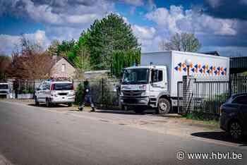 Wietplantage van 1.000 planten opgerold in Beverlo (Beringen) - Het Belang van Limburg Mobile - Het Belang van Limburg
