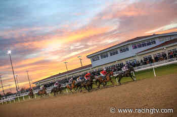 Results: Ministry of Sound Classical 21st August Handicap (6) (on Thu 6 May 2021 at Chelmsford City) - Racing TV
