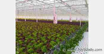 UltraClima climate technology applied in Lipetsk greenhouses - hortidaily.com