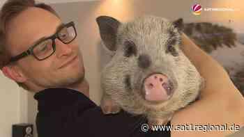 """""""Schnitzel"""" und """"Bacon"""": Ehepaar aus Osterholz-Scharmbeck lebt mit zwei Mini-Schweinen - Sat.1 Regional"""