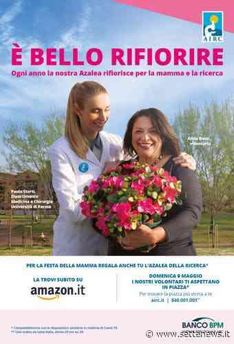 Torna a Legnano la solidarietà con i fiori della LILT e di AIRC - Settenews