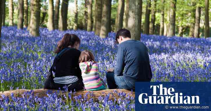 Branching out: why Britons are buying woodland in the Covid crisis