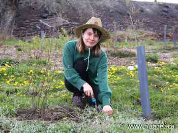Sudbury photo: Tending to a shared garden - The North Bay Nugget