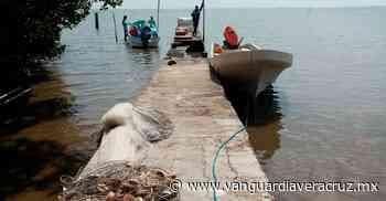 Pescadores furtivos de Pueblo Viejo, dueños de la veda de camarón - Vanguardia de Veracruz