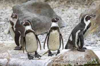 These jobs are still on offer at Colchester Zoo
