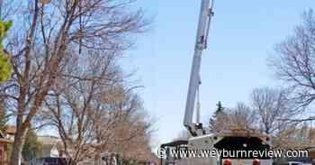 City of Weyburn's tree pruning program now underway - Weyburn Review