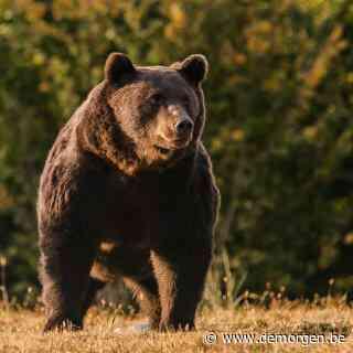 Prins van Liechtenstein schiet 'grootste beer van Roemenië' dood: ongeluk of doelbewuste actie?