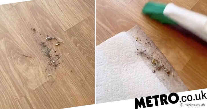 Woman's genius hack gets rid of dirt not picked up by a dustpan