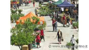 Cavriago diventa un giardino pieno di fiori - il Resto del Carlino