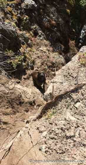 Chevy chase leads to Mountie, firefighter rescuing dog from cliff - Kamloops This Week