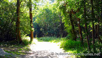 Forêt de Chantilly : un exemple des dégâts du réchauffement climatique - Bulletin des Communes