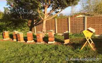 Mios : le monde des abeilles raconté par Laurent - Sud Ouest
