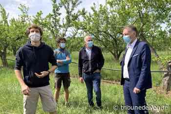 À Irigny, Bruno Bernard promet 400 euros par hectare aux agriculteurs frappés par le gel - Tribune de Lyon