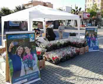 Airc in piazza a Ladispoli per la festa della mamma con le azalee della ricerca Airc - Terzo Binario News - TerzoBinario.it