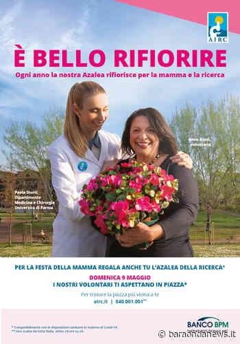 Ladispoli, AIRC in Piazza Rossellini per la festa della mamma con le azalee della ricerca - BaraondaNews