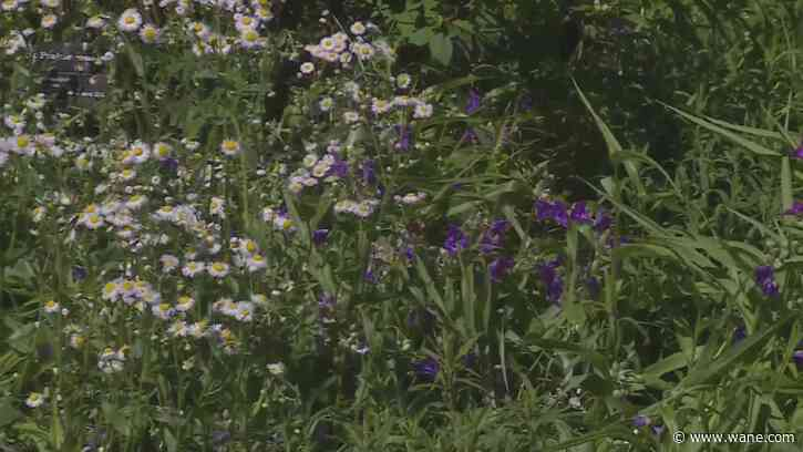 Give mom native plants this Mother's Day and help Mother Nature, too