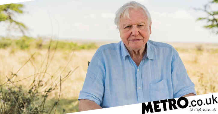 Sir David Attenborough only person to hit impressive Bafta milestone and we're not surprised