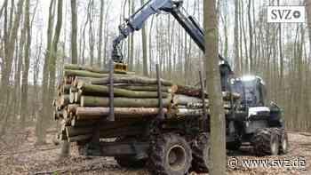 Forstgemeinschaft hilft der Stadt: Hagenow und der Holzreichtum   svz.de - svz – Schweriner Volkszeitung