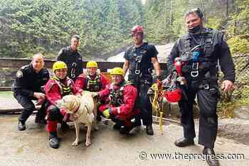 VIDEO: Dog survives plunge over Gold Creek Lower Falls in Maple Ridge – Chilliwack Progress - Chilliwack Progress