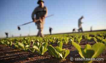 Forum Legambiente Campania, agroecologia regionale: a Caserta il 20% della superficie coltivabile | - CasertaWeb