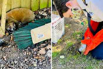 Bromley boy and his mum save tiny fox found with its head stuck in glass jar - News Shopper
