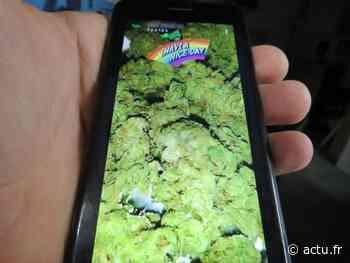Yvelines. Mantes-la-Jolie : Avec Snapchat, les dealers livraient du cannabis dans toute la région - actu.fr
